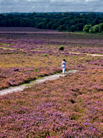 New Forest 1 (2)